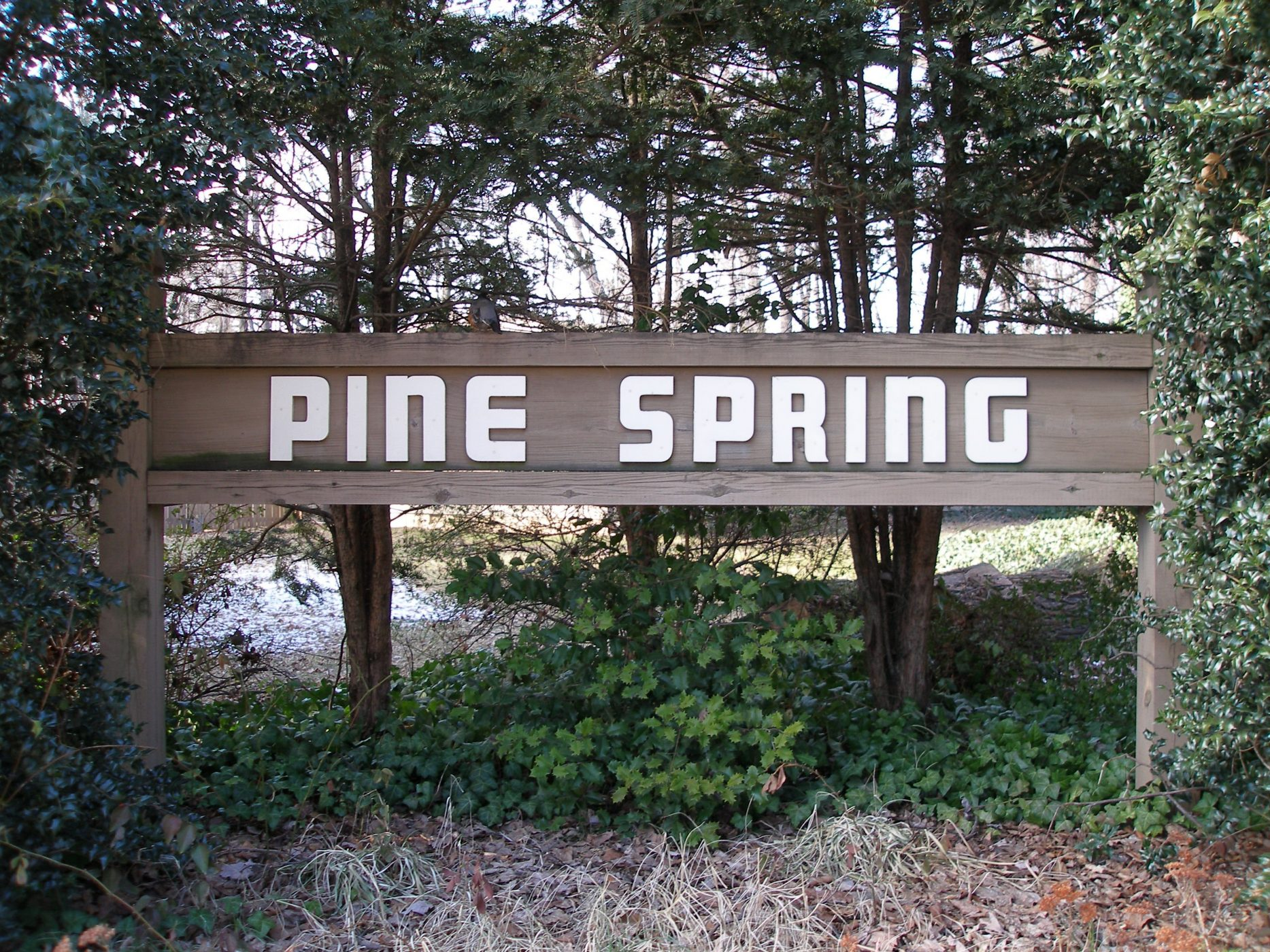 Pine Spring